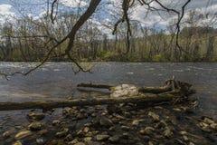 Парк штата мелководиь явора, Elizabethton, TN Стоковое Изображение