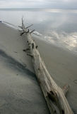 Парк штата пляжа острова Мили песчанных дюн и белого песочного bea Стоковые Изображения