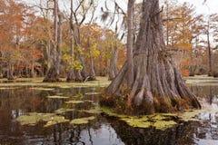Парк штата США NC Millpond купцев леса заболоченного места Стоковая Фотография