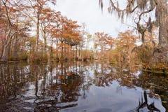 Парк штата США NC Millpond купцев заболоченного места леса Стоковая Фотография