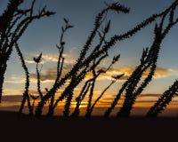 Парк штата Anza Borrego Стоковое Изображение
