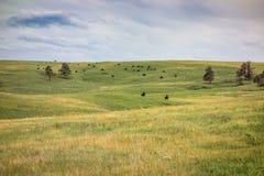 Парк штата Custer, Custer, SD стоковая фотография rf