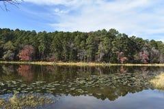 Парк штата Daingerfield в Техасе Стоковые Фото