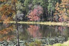 Парк штата Daingerfield в Техасе Стоковая Фотография