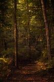 Парк штата Percy Warner Стоковые Изображения RF