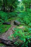 Парк штата 2 Silver Springs Стоковое Изображение