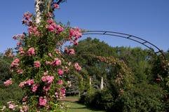 Парк Элизабета - розовое цветение стоковое изображение rf