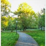 Парк Стоковая Фотография RF