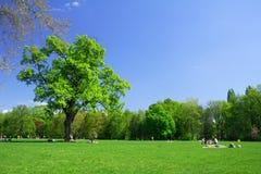 парк Стоковые Изображения