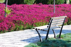 парк Стоковая Фотография
