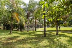Парк, aka Д-р города Ribeirao Preto Луис Карлос Raya Стоковая Фотография RF
