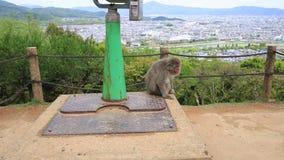 Парк Arashiyama обезьяны Iwatayama акции видеоматериалы