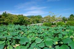 парк arashiyama Стоковые Изображения RF