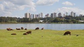Парк Barigui Стоковое фото RF