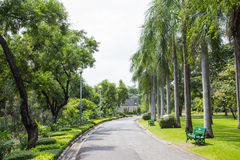 Парк Chatuchak в Бангкоке Таиланде Стоковая Фотография RF