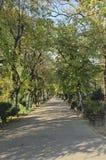 Парк Cismigiu Стоковые Фото