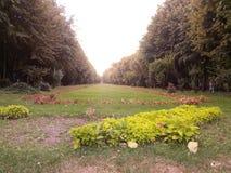 Парк Cismigiu Стоковое Изображение