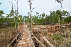 Парк Eco мангровы на острове Bantayan, Филиппинах Стоковые Изображения