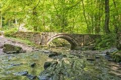 Парк Flintshire северное Уэльс страны Wepre таза дьяволов Стоковая Фотография RF