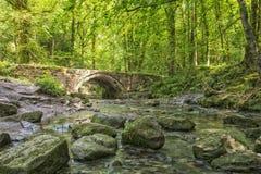 Парк Flintshire северное Уэльс страны Wepre таза дьяволов Стоковые Фото