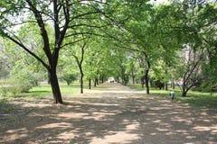 парк footpath Стоковые Изображения
