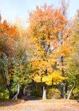 Парк Frankivsk Стоковое Изображение