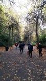 Парк Grafton, Дублин, Ирландия, приятная прогулка осенью стоковое фото rf