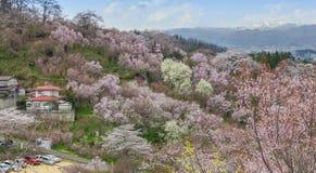 Парк Hanamiyama (горы цветков), Фукусима, Япония Стоковое фото RF