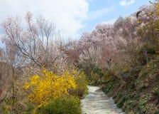 Парк Hanamiyama (горы цветков), Фукусима, Япония Стоковая Фотография