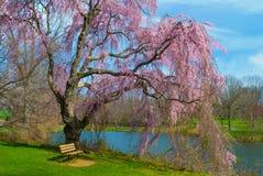 Парк Holmdel цветений весны стоковая фотография rf