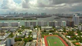 Парк 4k фламинго Miami Beach сток-видео
