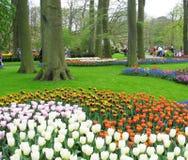 Парк Keukenhof стоковые фото
