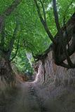 парк loess Стоковые Фотографии RF