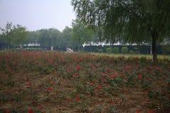 Парк Luopu, Лоян Стоковые Изображения RF