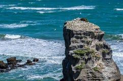 Парк Muriwai региональный, Новая Зеландия Стоковое фото RF
