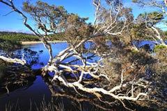 парк n entrecasteaux Австралии d западный стоковая фотография