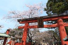 Парк Nara, Япония Стоковые Фото