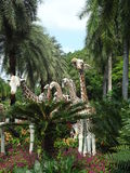 Парк Nong Nooch Стоковые Изображения