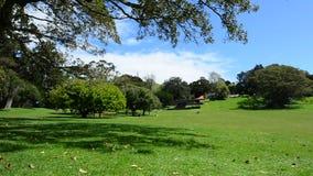 Парк Ornwall в Окленде Новой Зеландии видеоматериал