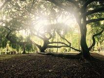 Парк Peradeniya в Шри-Ланке стоковые фотографии rf