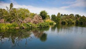 парк phoenix озера Стоковые Фото