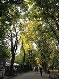 Парк Planty в Кракове Польше Стоковое Изображение