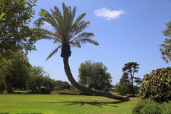Парк Ramat Hanadiv Стоковое Изображение RF