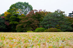 Парк Rikugien осенью Стоковые Изображения