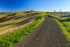 Парк Shakespear региональный, область Окленда, Новая Зеландия Стоковая Фотография