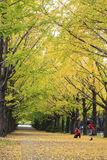 Парк Showa мемориальный стоковое фото