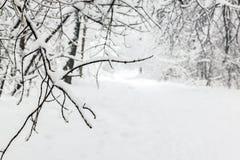Парк Snowy после снежностей стоковое изображение rf