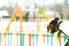 Парк Snowy с яркими цветами стоковое изображение