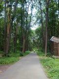 Парк Suvorovsky стоковые изображения rf