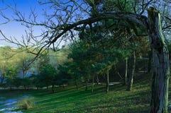 Парк Tineretului от Бухареста Румынии Стоковые Фото
